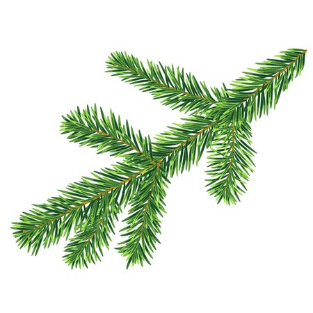 Single fir tree branch vector isolated on the white background