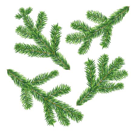 Four vector fir tree branches isolated on the white background