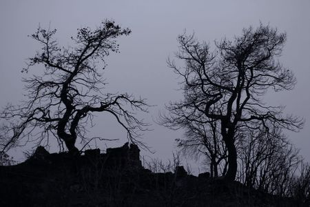 denuded: denuded trees for spooky and fear concepts