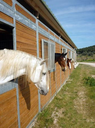 Horses in stall Stock Photo - 6737336