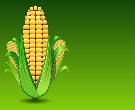fresh pop corn: corns illustration in green background. Stock Photo