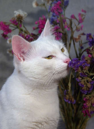 White cat smelling the flowers