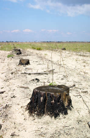 decedent: Line of stumps in the sand