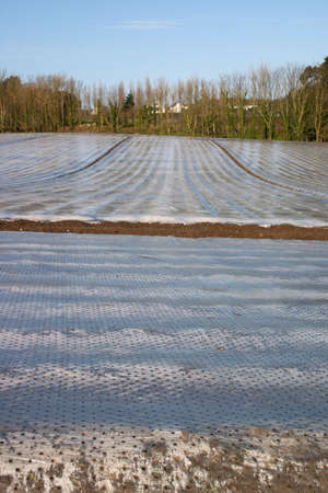 hotbed: field covered by polyethylen film at spring Stock Photo