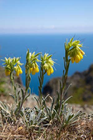 Yellow flowers near of the sea Stock Photo