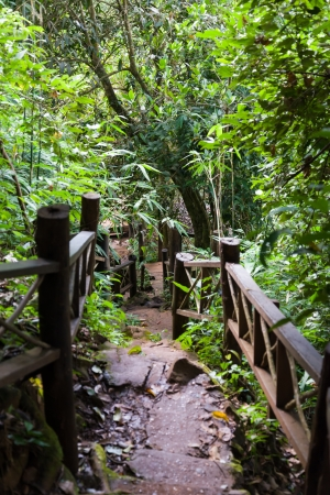 boardwalk trail: stone stairs with wood hand rail in the forest