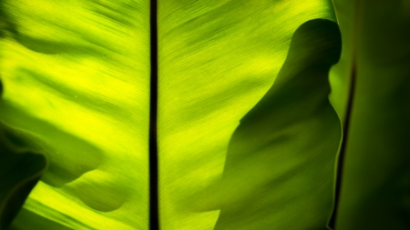 back of bird s nest fern leaf abstract lighting shot photo
