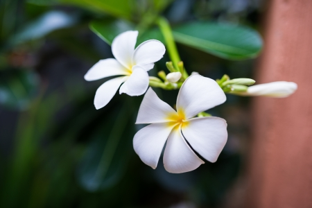 white flowers on dark blurred background,selective focus photo