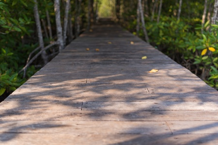 Wooden foot path through the forest photo