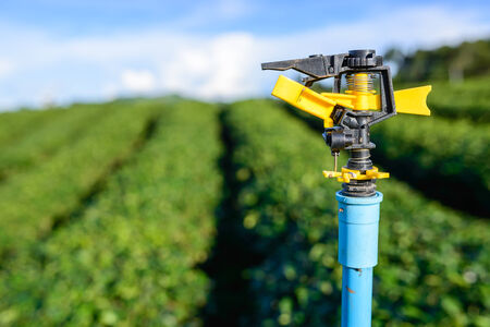 Sprinkler watering system in green tea plantation field photo