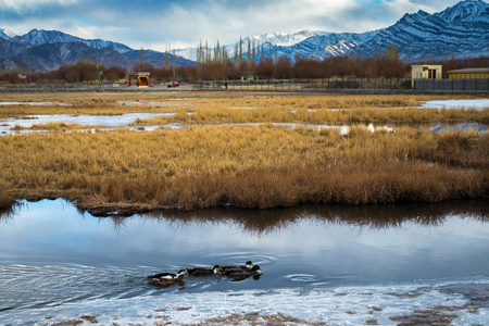 landscape of frozen pond with duck geese photo