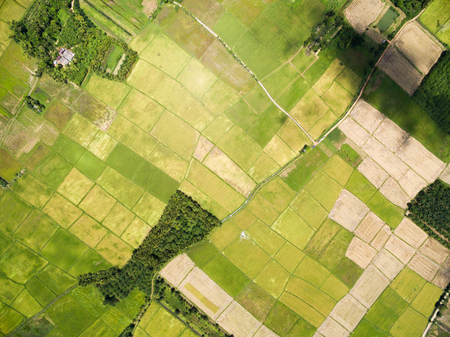aerial views: rice field plantation pattern aerial view Stock Photo