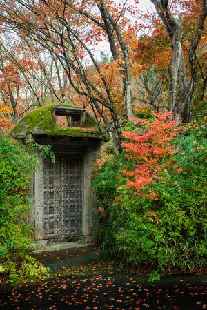 mosses: mosses metal gate door autumn leaves tree in garden