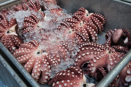 Giant raw octopus frozen in basket for sell at Tsukiji sea food market, Japan