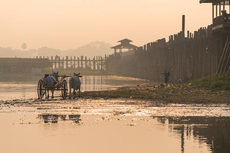Local man on wooden oxen cart front of U Bein bridge in Myanmar