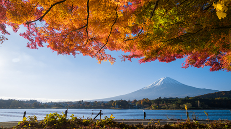 panorama of autumn red maple leaves mount Fuji Reklamní fotografie