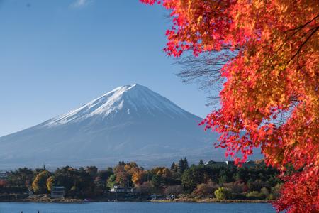 autumn red maple leaves mount Fuji