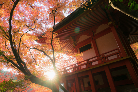 Japanese temple hall sun flare in autumn