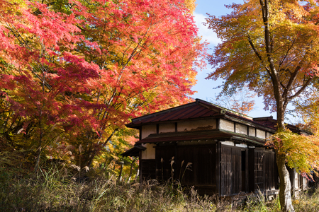 wooden house with autumn red yellow maple trees leaves