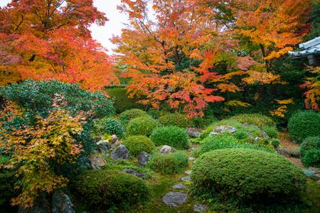 Traditional japanese garden in autumn