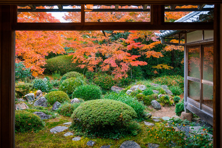 Traditional japanese garden in autumn looking through windows view