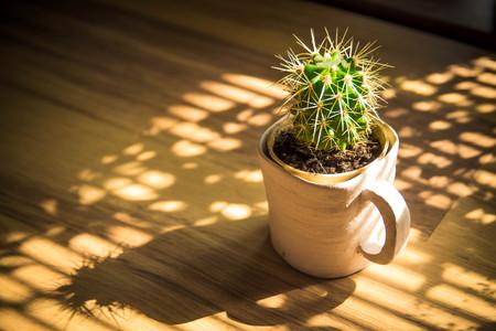ollas de barro: Cactus en una taza de arcilla sobre una mesa de madera en el sol de la mañana