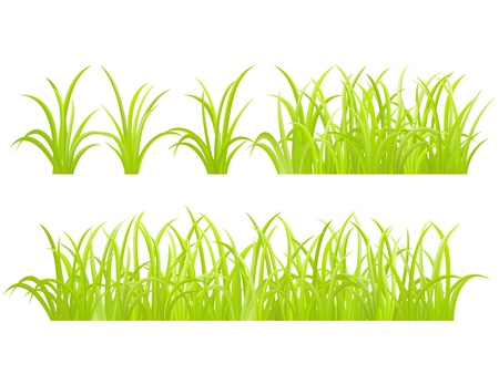 crecimiento planta: Hierba verde, aislados en fondo blanco, ilustraci�n vectorial