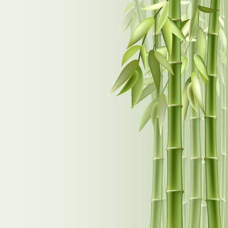 fengshui: Bamboo background with copy space. Vector illustration.