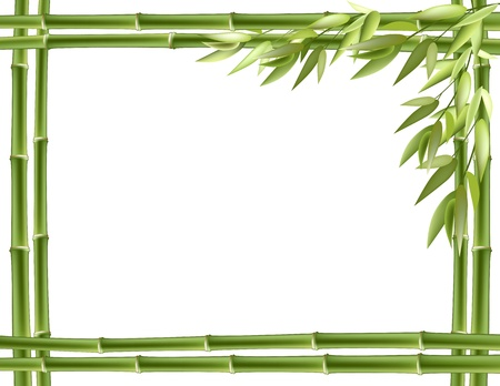 rainforest tree: Bamboo frame. Vector background with copy space.