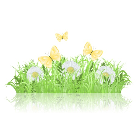 grass blade: Green grass with white flowers and butterflies