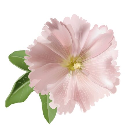 Pink mallow on white background  Vector illustration Vector