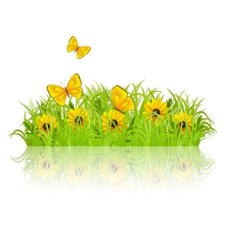 primavera: La hierba verde con flores blancas y mariposas Vectores