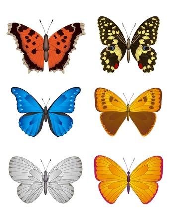 tekening vlinder: Set van kleurrijke vlinder op wit, Vector Illustratie Stock Illustratie
