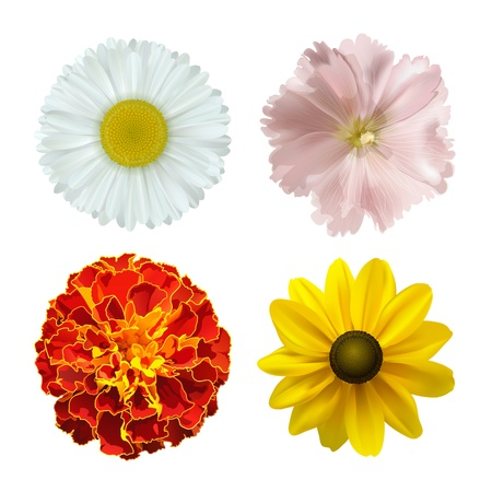 set of different summer flowers on a white background vector illustration