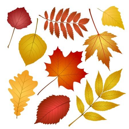 컬렉션 아름 다운 화려한 단풍 흰색 배경에 벡터 일러스트 레이 션에 고립 된 나뭇잎