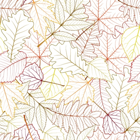 autumn colouring: seamless with autumn leaves on white background