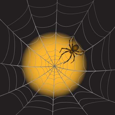 A Spider Web with Spider on moonlight background  Illustration