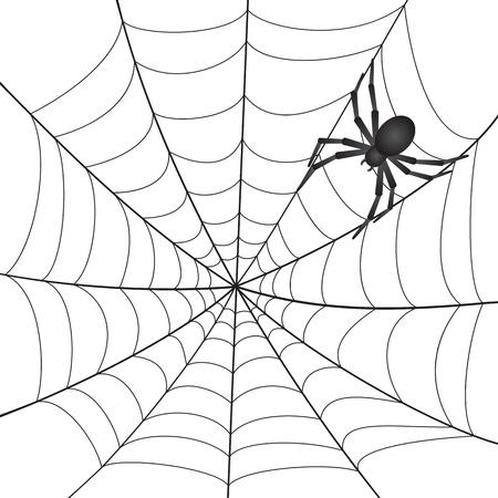 Een spinneweb met spin op een witte achtergrond