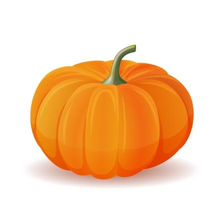 Orange pumpkin isolate  on white Stock Vector - 15711031