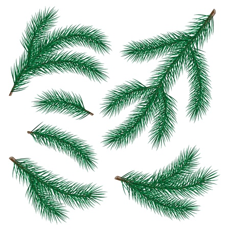 fir twig: set of fir branch on white background  vector illustration Illustration