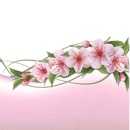 Spring header with pink cherry flowers, buds and copy space Stock Vector - 18058852