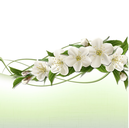 Spring header with white cherry flowers, buds and copy space