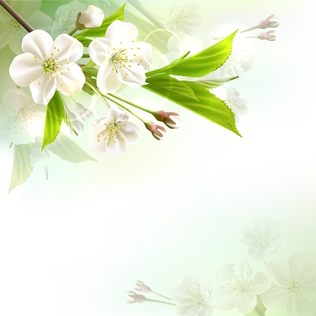 Blossoming tree branch with white flowers on bokeh green background  Vector illustration Vector