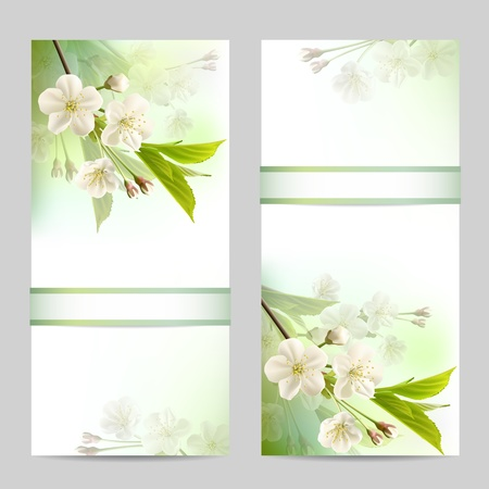 Set of spring banners with blossoming tree branch with white flowers  Vector illustration Vector