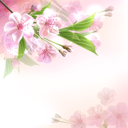 cerezos en flor: Florecimiento rama de un árbol con flores de color rosa en la ilustración vectorial de fondo bokeh