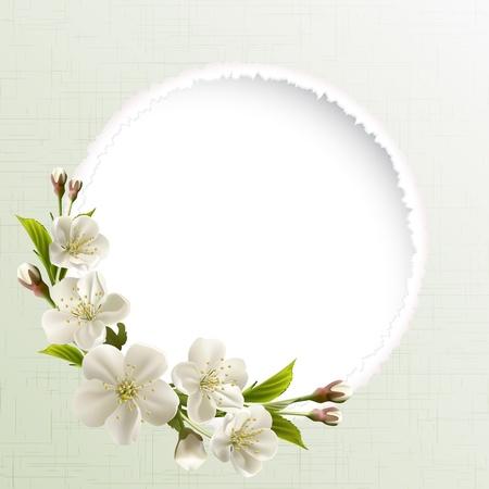 ramo di ciliegio: Intestazione di primavera con fiori bianchi di ciliegio, gemme e copia spazio Vettoriali