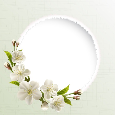 buds: Spring header with white cherry flowers, buds and copy space