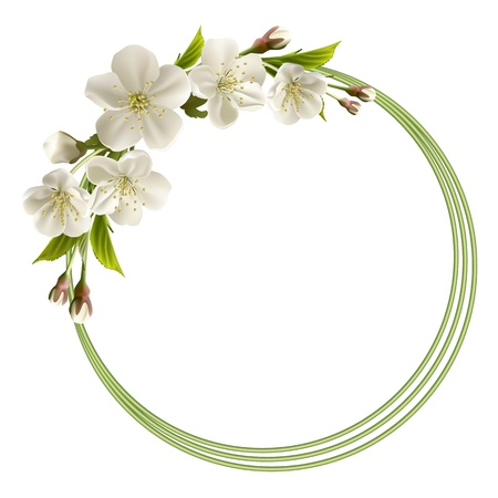Spring header with white cherry flowers, buds and copy space  Vector illustration Ilustracja