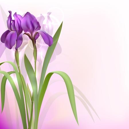 april beautiful: Purple Iris Flowers on bokeh background  illustration