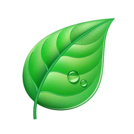 single: Glossy green leaf with drops of water   Vector illustration